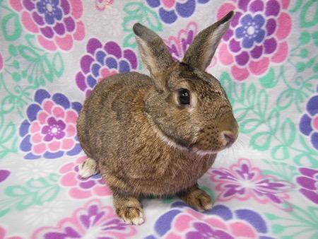 The Rabbit Haven - Adoption Showcase